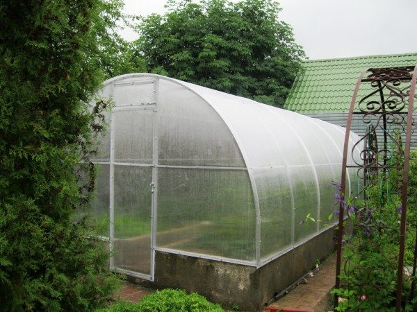 Полноразмерная конструкция для высокорослых сортов