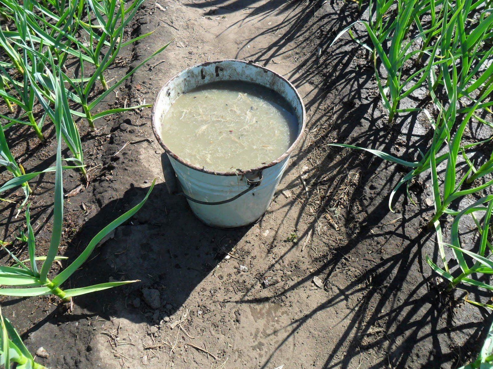 Подкормка огурцов в теплице: как осуществлять