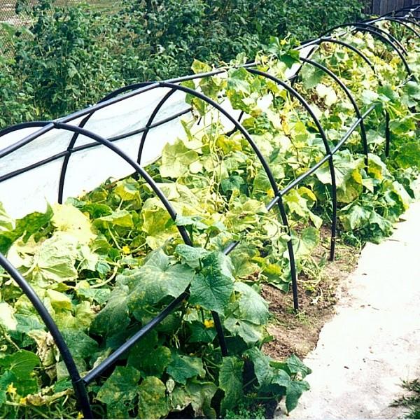 «Счастье Дачника» – парник для загородного участка