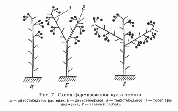 Схематическое изображение основных форм