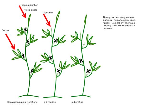 Схемы формирования кустов на начальном этапе