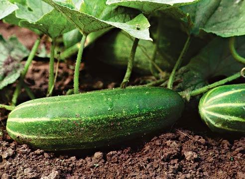 Со сбором урожая тянуть не стоит!