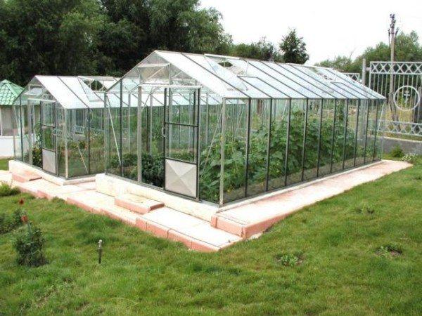 Стационарная теплица из оргстекла – отличное решение для зимнего выращивания томатов