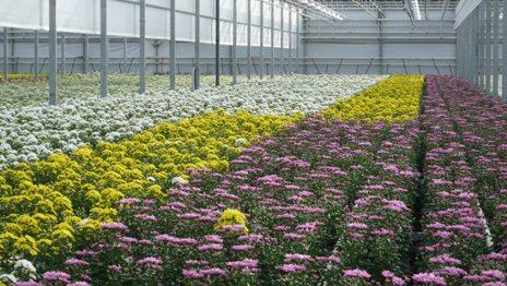 Цветущие поля радуют взоры владельцев