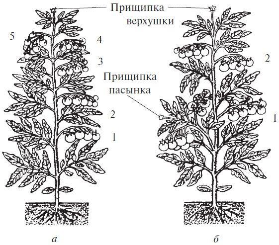 Варианты формирования куста