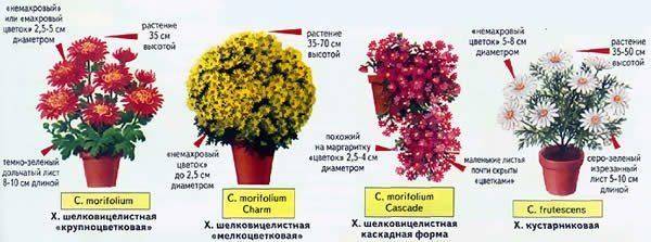 Виды, доступные для выращивания