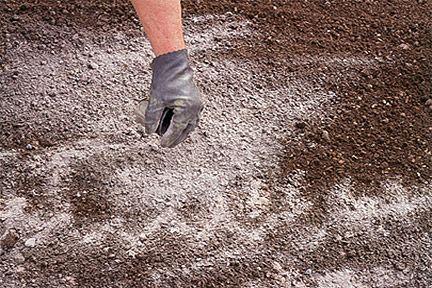 Внесение извести в почву снижает ее кислотность.