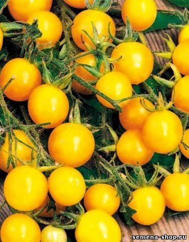 Яркие плоды сорта Желтая Вишня очень сладкие.