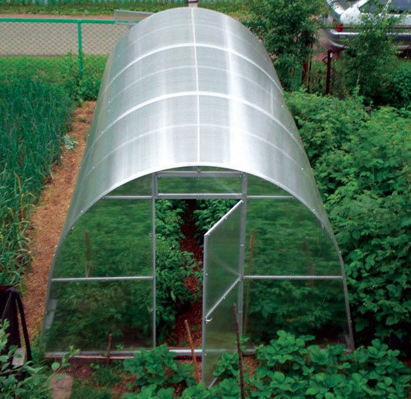 Фото арочной конструкции с каркасом из алюминиевого профиля, покрытая поликарбонатом.