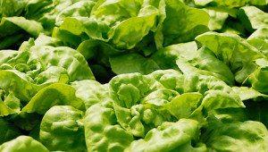 Крупное фото зелени