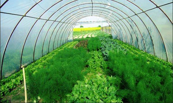 Парник для выращивания салата и зелени