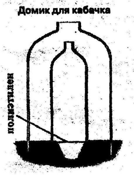 Домик для семян кабачка