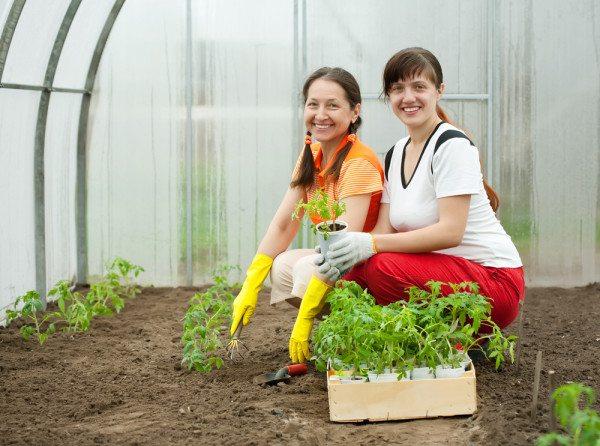 Фото высадки растений
